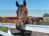 Jane (Yearling